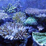 30年後にはサンゴ礁が消える!?リゾート好きに知ってもらいたいこと